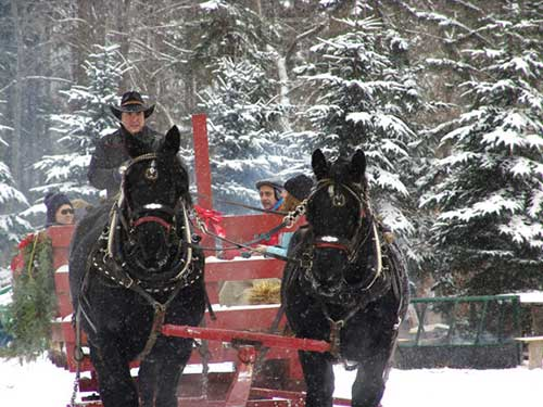 Falling snow on horse drawn sleigh ride